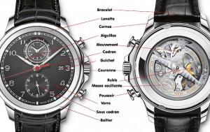 anatomie montre